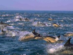 delfini_branco