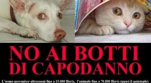 cani-gatti-botti3
