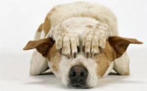capodanno-cani-e-gatti-ecco-perche-hanno-terrore-botti-anteprima-600x373-552357