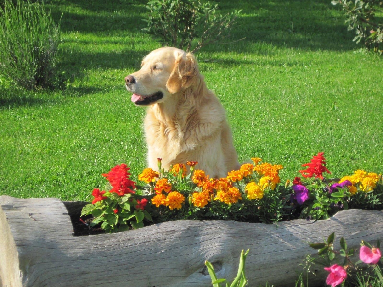 Valerio moschetti il cane non un ornamento da giardino - Giardino per cani ...