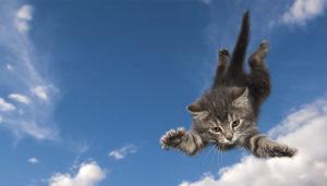 gatto-scogliera